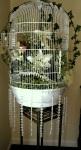 Large, flower-filled bird-cage